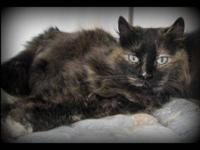 Domestic Medium Hair - Fluffy - Medium - Young - Female