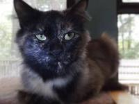 Domestic Medium Hair - Ms. Darling - Medium - Adult -