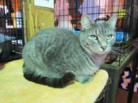 Domestic Medium Hair - Riley - Medium - Adult - Male -