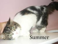 Domestic Medium Hair - Serena - Medium - Young - Female