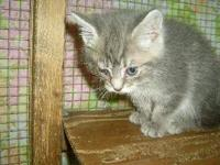 Domestic Medium Hair - Stormy - Small - Young - Female