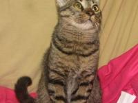 Domestic Medium Hair - Thumper - Small - Baby - Male -