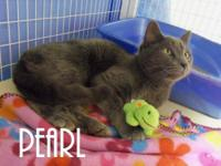 Domestic Short Hair - 19223791 - Medium - Adult - Cat