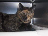 Domestic Short Hair - 49825 - Small - Adult - Female -
