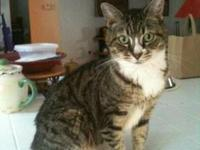 Domestic Short Hair - Adele - Medium - Senior - Female