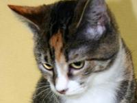 Domestic Short Hair - Alyssa - Medium - Young - Female