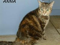 Domestic Short Hair - Anna - Small - Adult - Female -