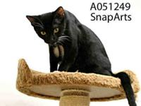 Domestic Short Hair - Big Ben - Small - Adult - Male -