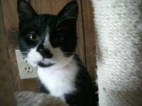 Domestic Short Hair - Black and white - Grace - Small -