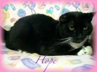 Domestic Short Hair - Black and white - Hope - Medium -