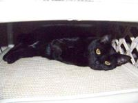 Domestic Brief Hair - Black and white - Olivia - Tiny -