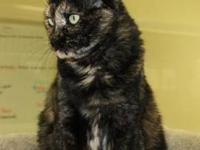 Domestic Short Hair - Black - Jada - Large - Senior -