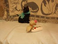 Domestic Short Hair - Black - Sooty - Medium - Baby -
