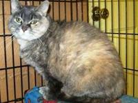 Domestic Short Hair - Blair - Small - Adult - Female -