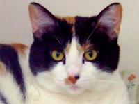Domestic Short Hair - Connie - Small - Adult - Female -