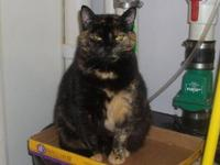 Domestic Short Hair - Darcy - Medium - Young - Female -