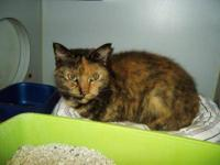 Domestic Short Hair - Eden - Small - Young - Female -