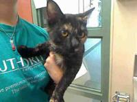 Domestic Short Hair - Elaine - Small - Young - Female -