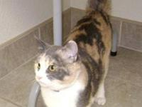Domestic Short Hair - Evita - Medium - Young - Female -