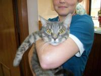 Domestic Short Hair - Hudson - Medium - Young - Male -