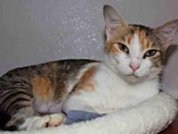 Domestic Short Hair - Jasmine - Small - Young - Female