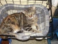 Domestic Short Hair - Jewel**urgent** - Medium - Young