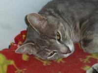 Domestic Short Hair - Kenya - Medium - Adult - Female -