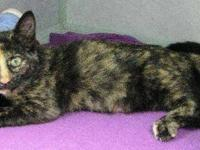 Domestic Short Hair - Lexi - Medium - Young - Female -