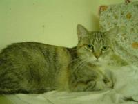 Domestic Short Hair - Martha - Medium - Adult - Female