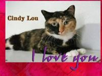 Domestic Short Hair - Mary Lou - Medium - Adult -