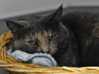 Domestic Short Hair - Monae - Small - Young - Female -