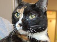 Domestic Short Hair - Patches - Medium - Adult - Female