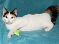 Domestic Short Hair - Patsy - Small - Young - Female -