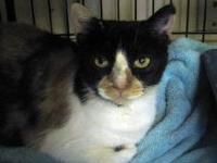 Domestic Short Hair - Raisen - Medium - Young - Female