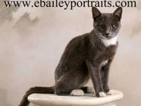 Domestic Short Hair - Spot - Medium - Young - Female -