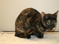 Domestic Short Hair - Talia - Medium - Young - Female -