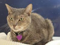 Domestic Short Hair - Thelma - Medium - Senior - Female