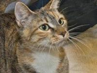 Domestic Short Hair - Trudy - Medium - Adult - Female -