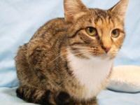 Domestic Short Hair - Winona - Small - Adult - Female -