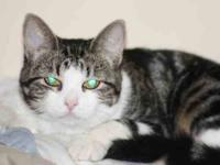Domestic Short Hair - Winter - Medium - Young - Female