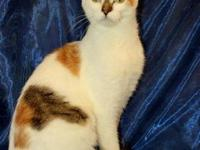 Domestic Medium Hair - Pearl - Small - Young - Female -