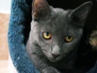 Domestic Short Hair - Aloha - Small - Young - Female -