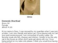 Domestic Short Hair - Black and white - Oreo - Large -
