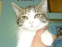 Domestic Short Hair - Flora - Medium - Young - Female -