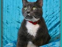 Domestic Short Hair - Geraldine - Medium - Adult -