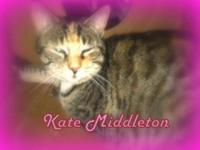 Domestic Short Hair - Kate Middleton - Medium - Adult -