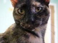 Domestic Short Hair - Kikki - Medium - Adult - Female -