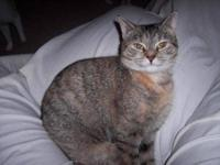 Domestic Short Hair - Lana - Medium - Young - Female -
