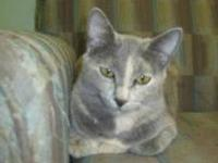 Domestic Short Hair - Makayla - Medium - Young - Female
