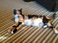 Domestic Short Hair - Pretty Lucy - Medium - Young -